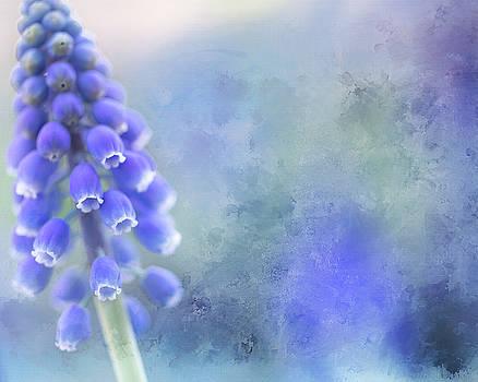 Grape Hyacinth 3 by Rebecca Cozart
