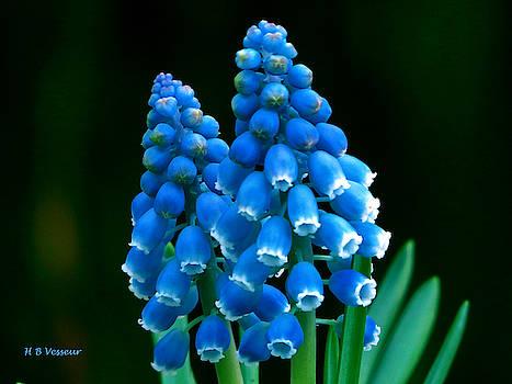 Blue Spring by B Vesseur