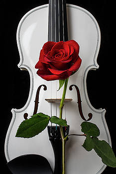 Graphic White Violin And Red Rose by Garry Gay