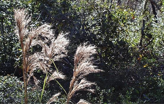 Grass in the Sunlight by Scott Gunnerson