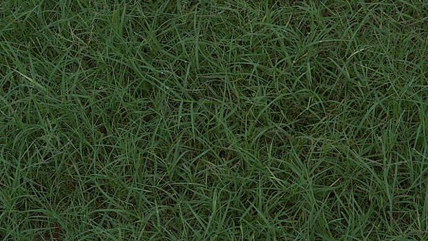 Grass by Philip A Swiderski Jr