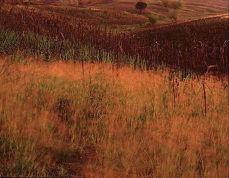 Grasses and sugarcane, Trinidad by Trinidad Dreamscape