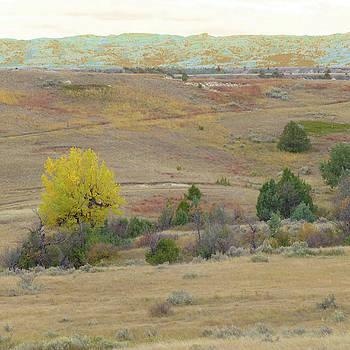 Grassland Path by Cris Fulton