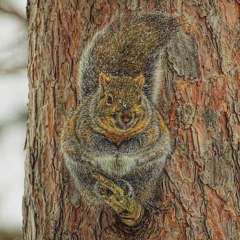 Dale Kauzlaric - Gray Squirrel Portrait