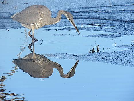 Great Blue Heron by David Bannwart