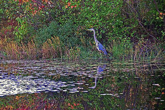 Great Blue Heron in Autumn by Wayne Marshall Chase