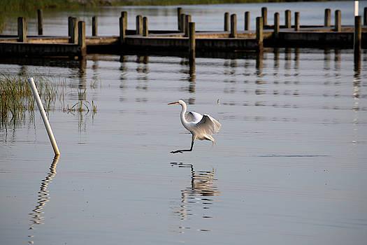 Great Egret 5 by David Stasiak