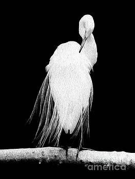 Great Egret In Full Bloom II by Kenneth Montgomery