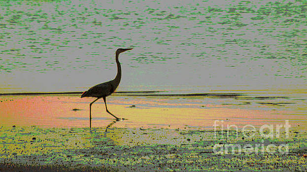 Great Heron On The Beach by Sharon Mayhak