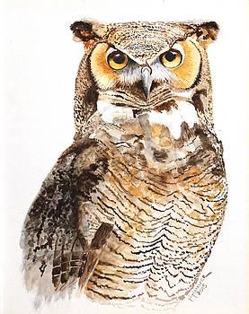 Great Horned Owl Portrait by Nelson Hammer