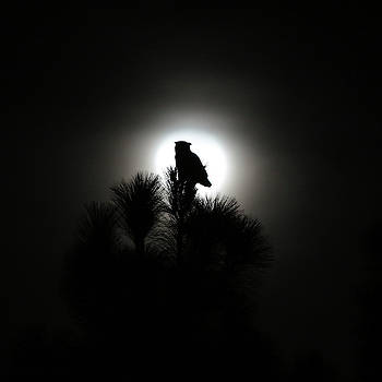 Robin Street-Morris - Great Horned Owl with Winter Moon