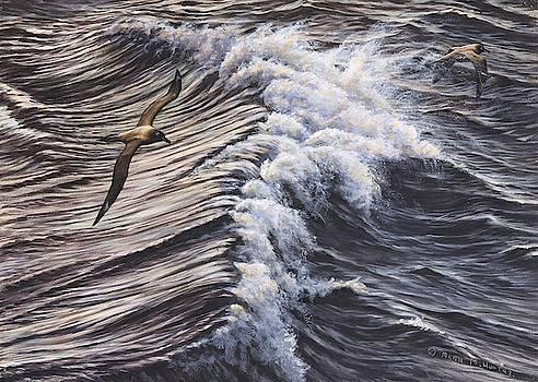 Great Skua Seabirds by Alan M Hunt by Alan M Hunt