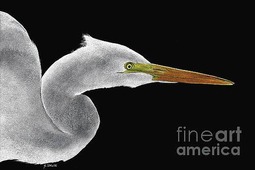 Great White Egret by Sheryl Unwin
