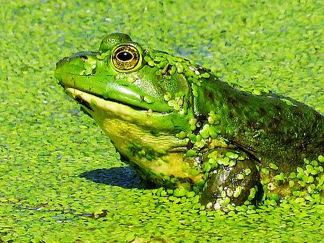 Green All Over  by Lori Frisch