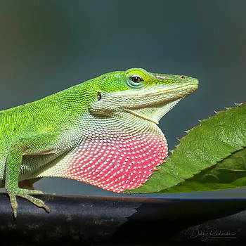 Green Anole Lizard Profile by Debby Richards
