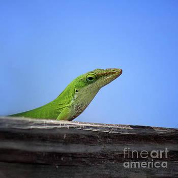 Green Anole Lizard Square Two by Karen Adams
