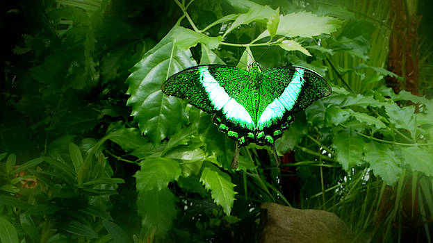 Green Butterfly - Perfect Camouflage by Chris Gill