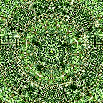 Green Celtic Knot Circle Kaleidoscope by Cindy Boyd