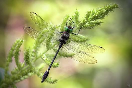 Green Eyes by John Meader
