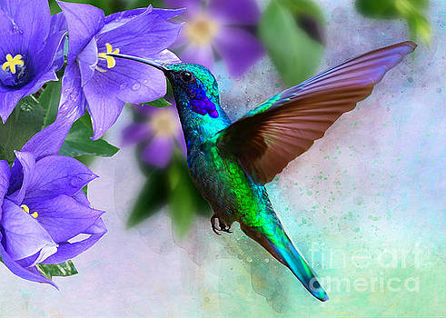 Green Hummingbird on Campanua by Morag Bates
