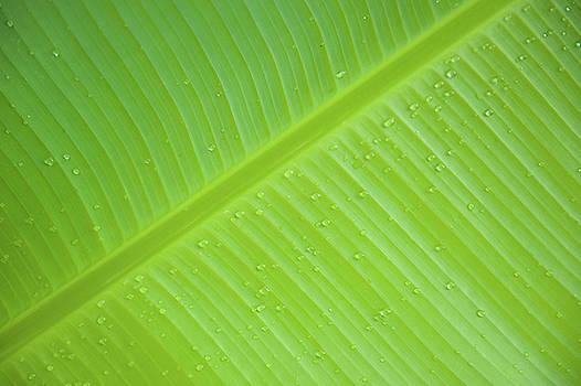 Green Leaf Markings iii by Helen Northcott