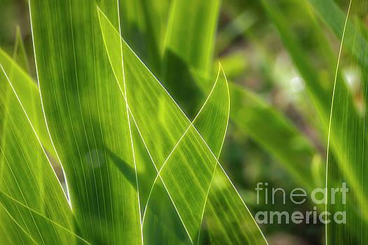 Green leaves by Veikko Suikkanen