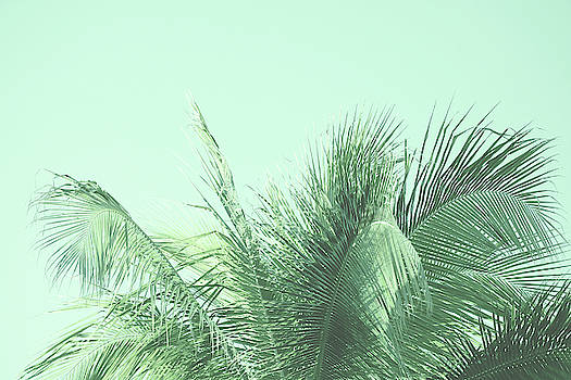 Kristian Gallagher - Green Palm