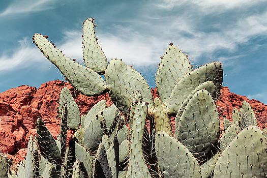 Green Prickly Desert Flora by Evgeniya Lystsova