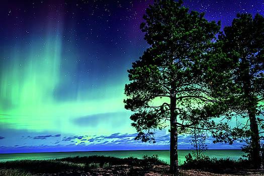 Green Solitude by John Wilkinson