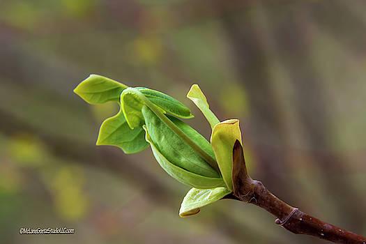 Green Spring Buds by LeeAnn McLaneGoetz McLaneGoetzStudioLLCcom