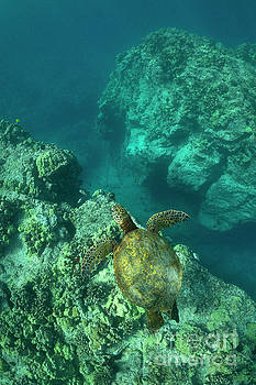 Turtle Reef by Aaron Whittemore