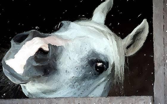 Grey Arabian Horse Portrait in Watercolor Portrait by Olde Time Mercantile