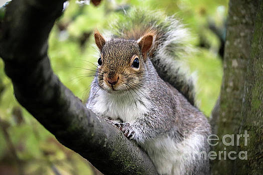 Grey Squirrel by Leon Woods