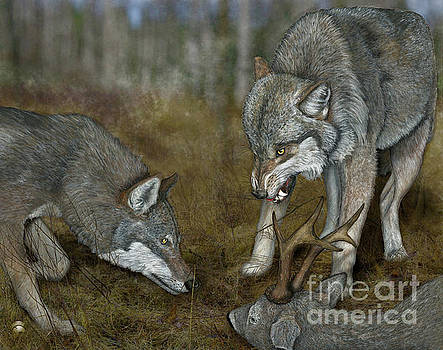 Grey Wolf Canis lupus - Wolf - Ulv - Varg - Fine Art Print - Stock Illustration - Stock Image by Urft Valley Art
