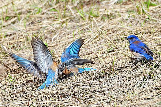 Ground Battle by Mike Dawson