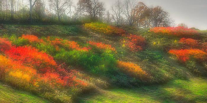 Ground Bouquet No. 3 - Somewhere in Greene County, Pennsylvania - Autumn by Michael Mazaika