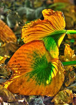 Ground Bouquet No. 4 - One Final Flourish - Frederick County, Maryland - Autumn by Michael Mazaika