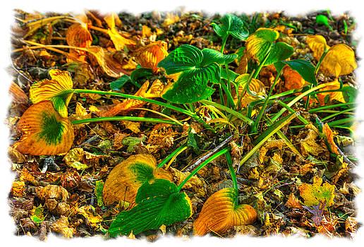 Ground Bouquet No. 5 - A Final Flourish - Frederick County, Maryland - Autumn by Michael Mazaika