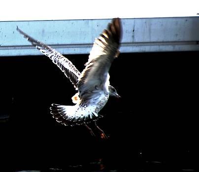 Gull at Charlotte Marina, Rochester , NY by Gerald Salamone