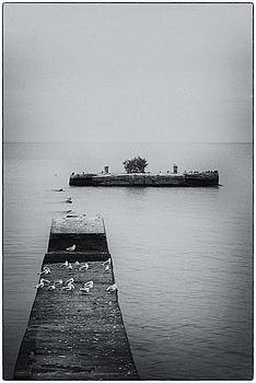 Gulls on the Pier by Guy Whiteley