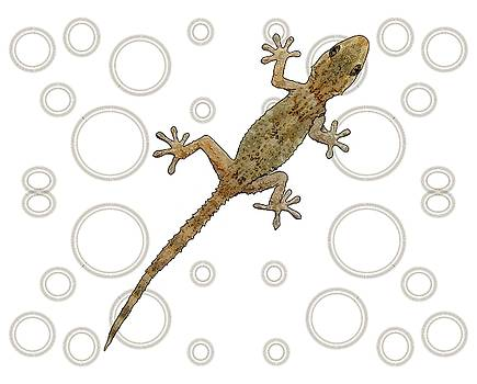 H is for House Gecko by Joan Stratton