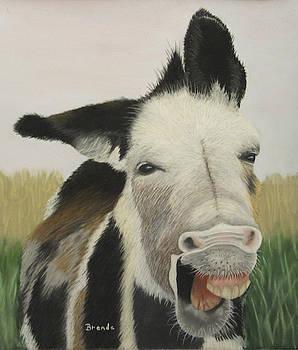 Ha Ha Hee Haw by Brenda Maas