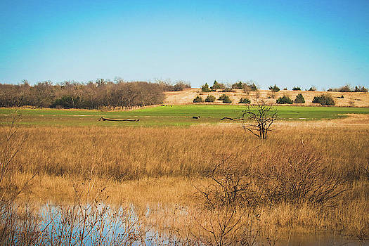 Hagerman Wildlife Refuge 2 by Lisa Bell