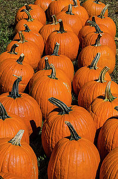 Halloween Harvest by Paul Croll
