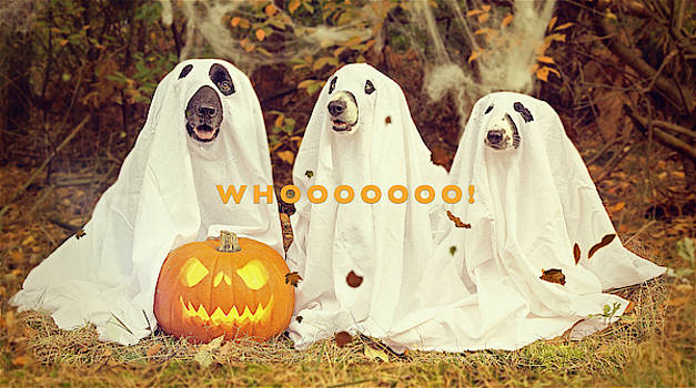 Halloween Hounds by ISAW Company