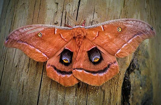 Halloween Moth by Vincent Autenrieb