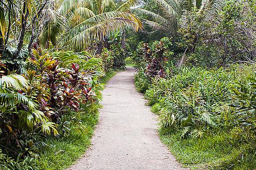 Hana Pathway by Jackson Ball
