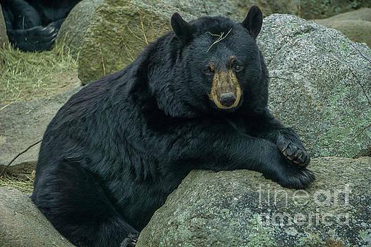 Handsome Bear by Linda Howes