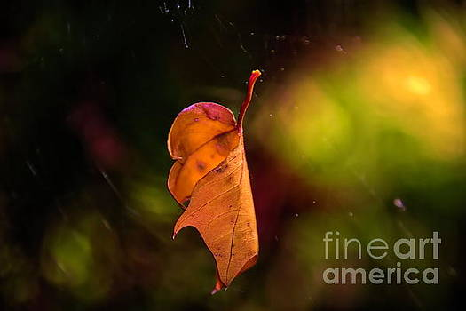 Hanging by a Thread by Diana Mary Sharpton
