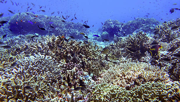 Happy and healthy reef with lots of life in Tubbataha by Paul Ranky